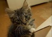 Wenn Katzen langeweile haben