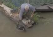 Piranhas zerlegen Ente