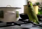 Papagei macht Krawall