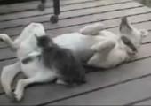 Katze massiert Hund