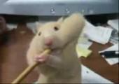 Hamster will Bleistift essen
