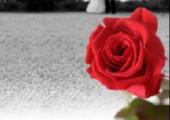 Geschenktipp zum Valentinstag: Ewige Rose