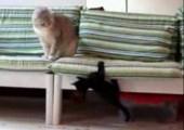 Katze bewacht ihre Couch