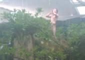 Remi Gaillard - Tarzan