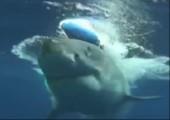 Einem Hai die Hand schütteln