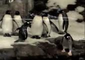 Der Ninja Pinguin