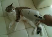 Katzen sauber machen
