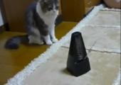 Katze vs. Metronom