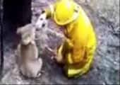 Koalabär hat Durst