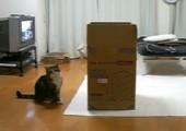 Eine Katze und ihre Kiste