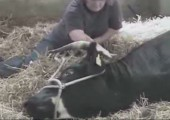 Die Geburt des Oxen
