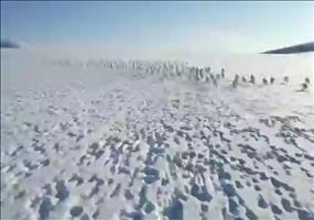 Hasenjagd in Sibirien