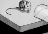 Maus ohne Mausfalle fangen
