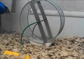 Ich glaube der Hamster macht da irgendwas falsch