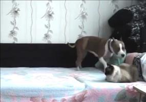 Dieser Hund darf nicht aufs Bett