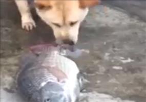 Der Hund und die Fische - Vergebliche Rettungsversuche