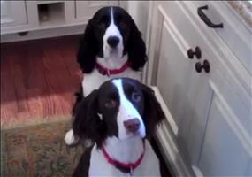Essenszeit für Hunde