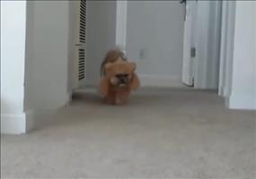 Bestes Hundekostüm ever!