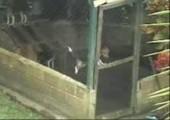 Der Houdini Hund