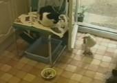 Möwe klaut sich Katzenfutter