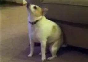 Hund tanzt zu Shake that ass for me
