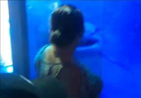Krasse Hai-Attacke auf Frau