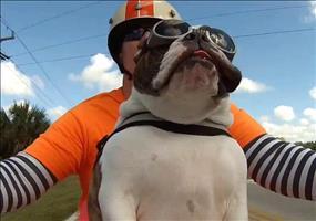 Hund grüßt andere Motorradfahrer