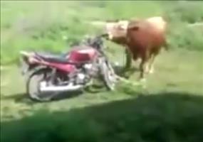 Bulle vs. Motorrad