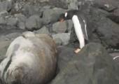 Pinguin beschreitet einen gefährlichen Pfad