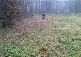 Hund als lebendes Projektil
