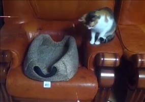 Da angelt doch jemand nach Katzen