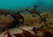 Seepferdchen tanzen