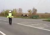 Pferd auf Autopilot