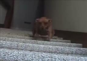 Hund mit schnellen Beinchen