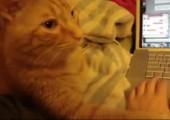 Katze will Händchen halten