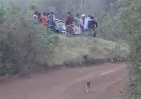 Dieser Hund hat mehr Glück als Verstand