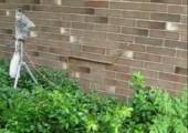 Schlange kletter Mauer hoch