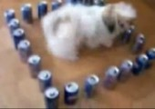 Hund vs. Dosen
