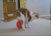 Aufgeladene Katze rennt mit Ballon rum