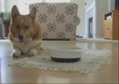 Hund tanzt zum essen