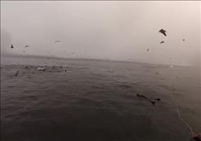Neulich beim Schnorcheln im Meer
