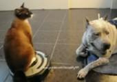 Staubsaugerkatze vs. Hund