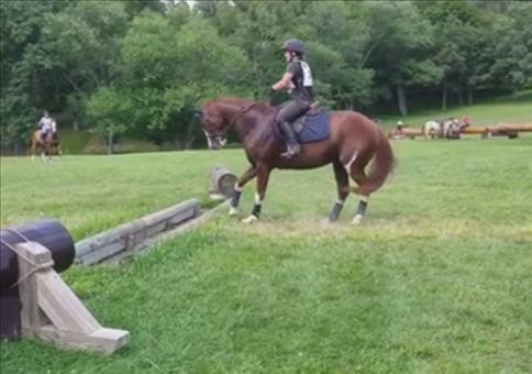 Pferd setzt zum ganz großen Sprung an