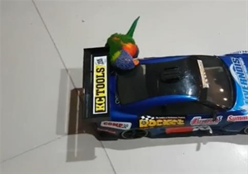 Larry fährt gerne ferngesteuerte Autos
