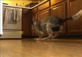 Fang den Ball in der Küche spielen - Keine gute Idee