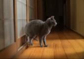 Die Katze klopft