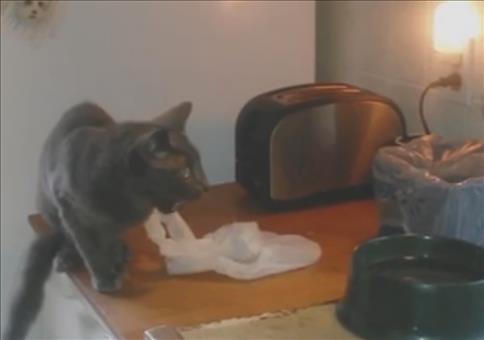 Auf die Katze, fertig, Toast!