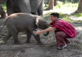 Mit dem Baby Elefanten schmusen