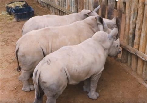 Wenn Baby Nashörner die Milch ausgeht