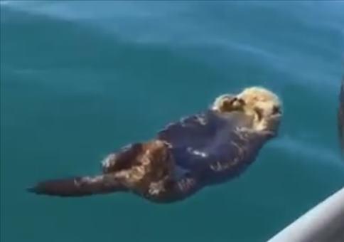 Schlafenden Otter wecken